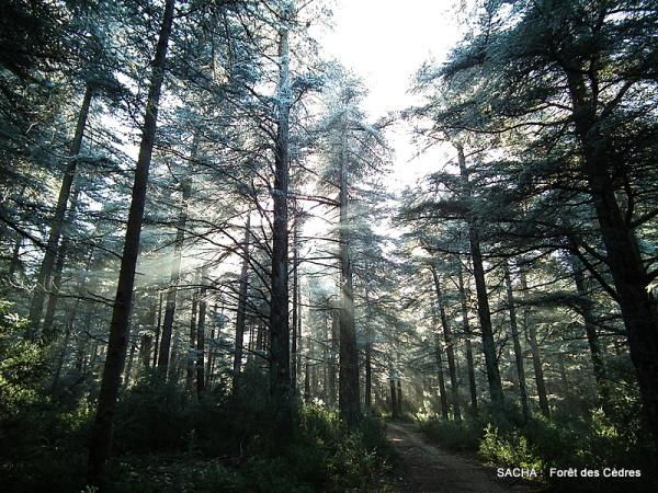 """Forêt des Cèdres """" face Nord  Massif du Luberon """""""