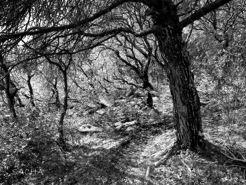 Chemin puits des Cayères Luberon