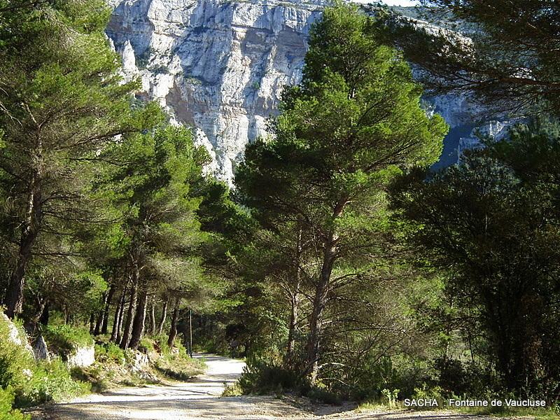 """Draille des Baumes Rouges """" Mts de Vaucluse """""""