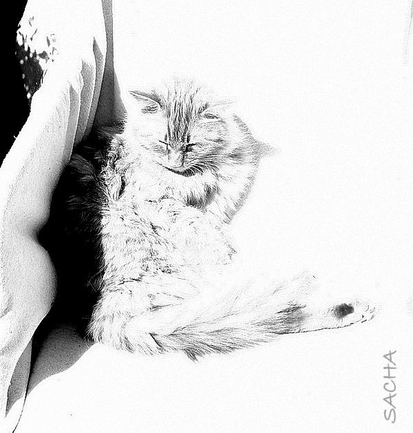 Le chat Matisse