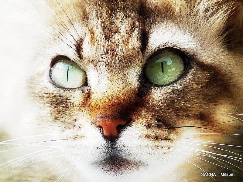 Le chat Mitsumi