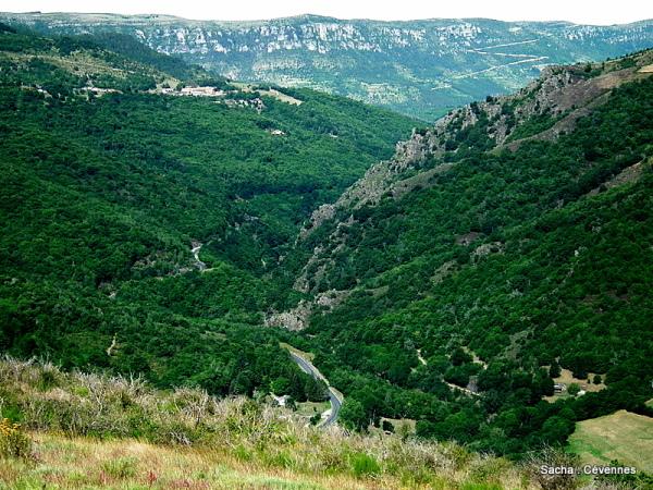 Vue du Serre de Rébiouse Cévennes