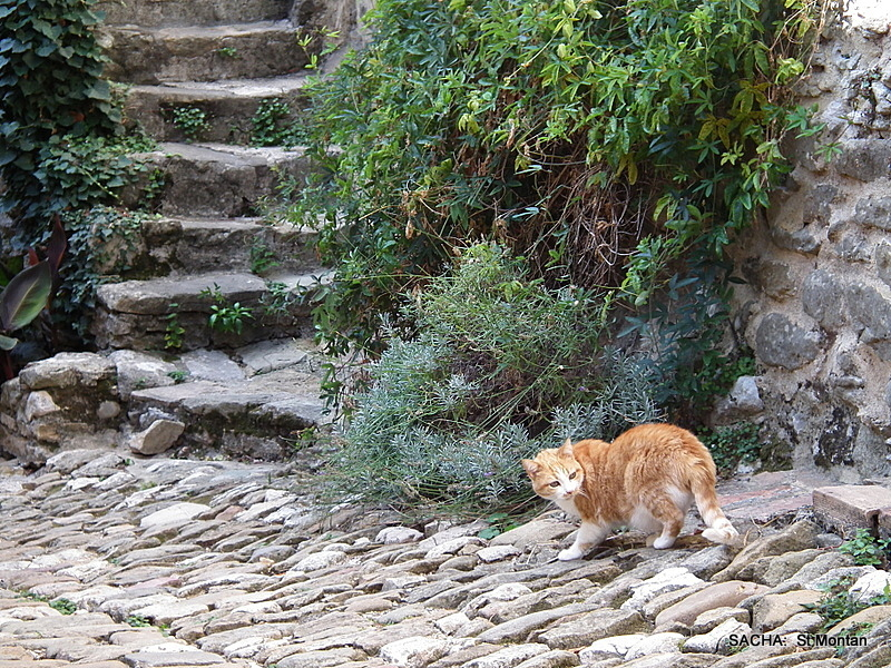 Chat , village St Montan , Ardèche