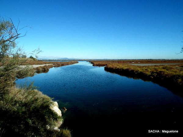 Marais de Maguelone