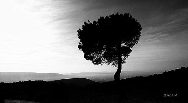 """Solitude """" Monts du Vaucluse/massif du Luberon"""