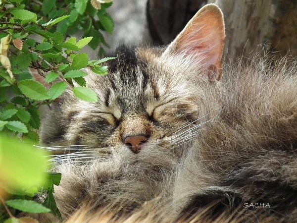 La sieste ..Fanette