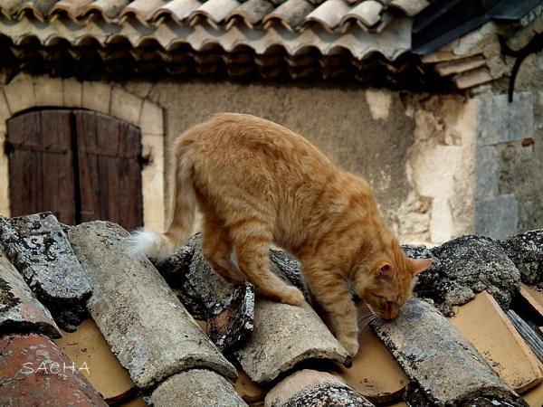 """Funambule  et chasseur """"  le chat Matisse """""""
