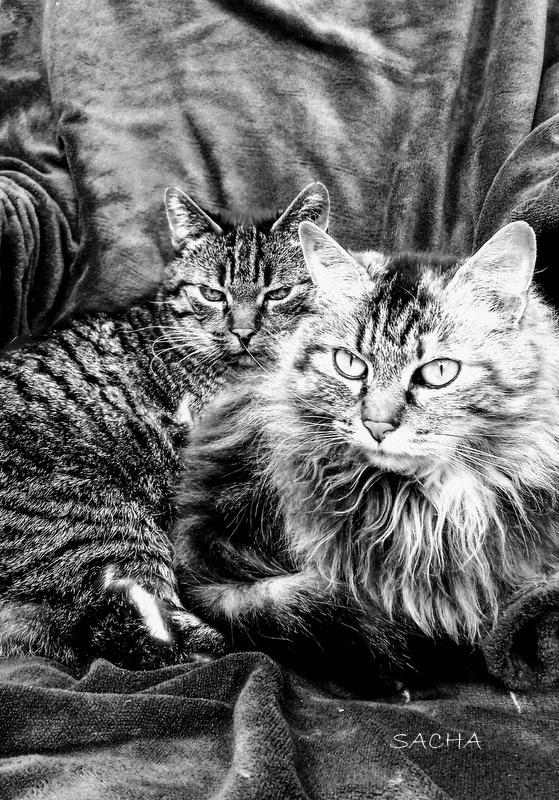Mes chats Hemingway 18 ans et Fanette 4 ans