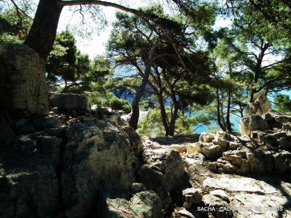 Sentier calanque de Port Pin Cassis