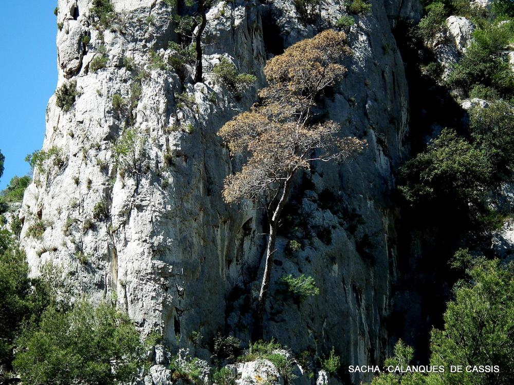 Roches vallon d'En Vau
