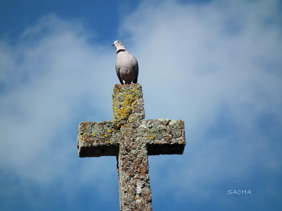 Pigeon , chapelle St Roch Montbonnet