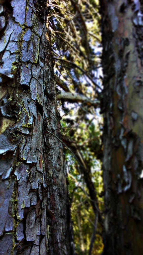entre les arbres...