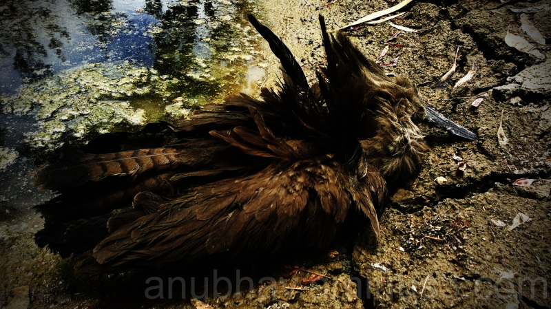 dead, miserable bird dat proved to be a gud pic!!