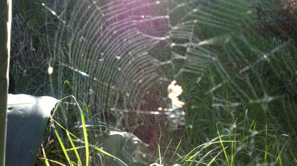 .... creepy spider web