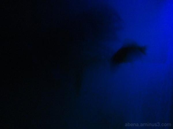 No.7 Phantom fish2