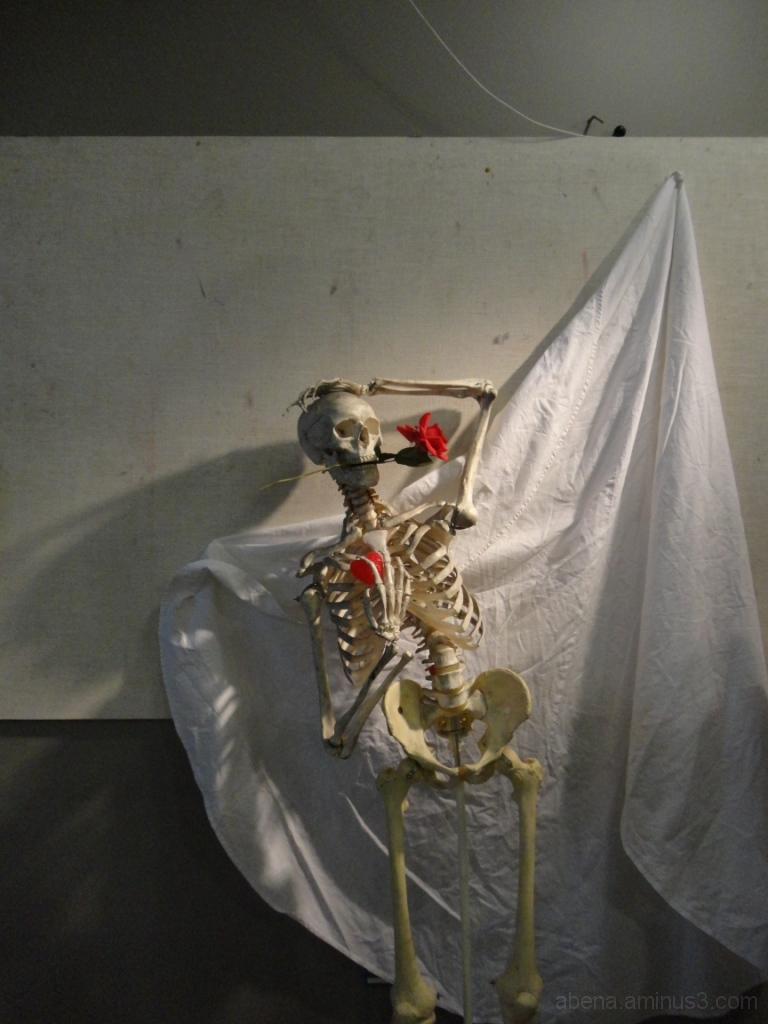 Skeleton still life setup