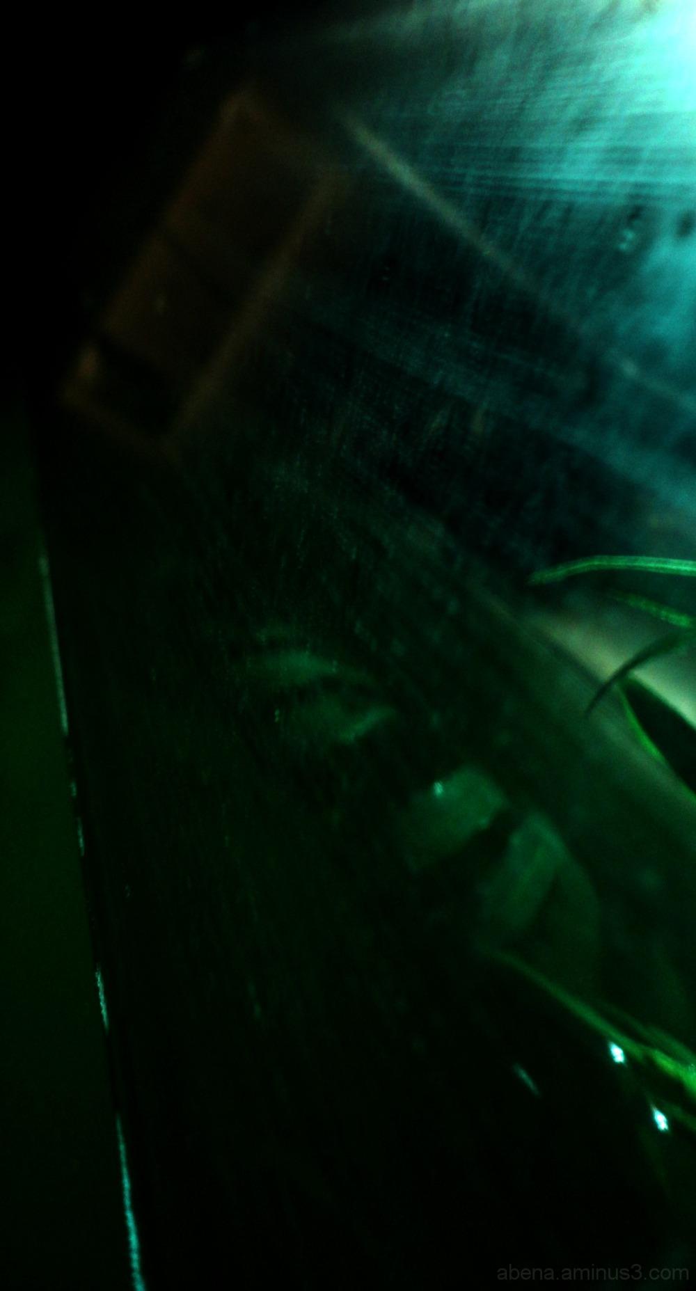 2. Night time fish tank obsession