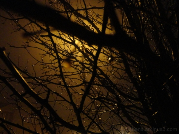 Night time rainy quietude continued