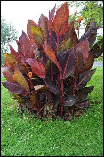 """Leafy Reds"""