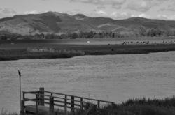 """""""New Zealand Landscape"""""""