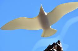 """Jonathan Livingston Seagull"""