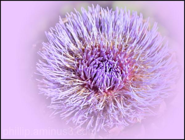 """""""Artichoke Flower"""""""