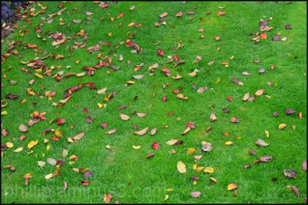 """""""Fallen Leaves"""""""