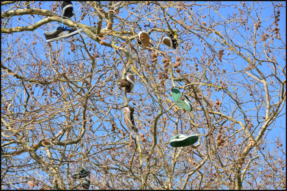 """The Shoe Tree"""