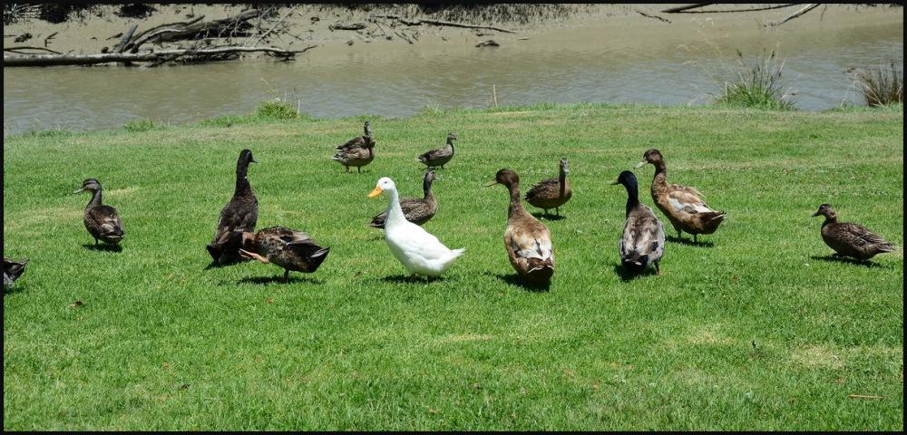 """Ducks Tail"" Part 5"