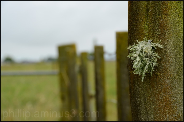 """Lichen on Post"""