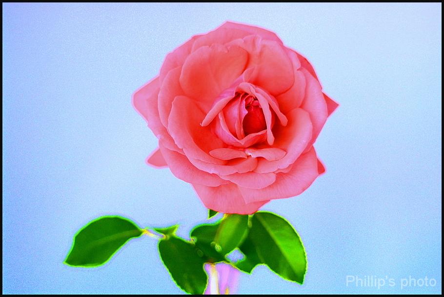 Flowers For Bruce # 4