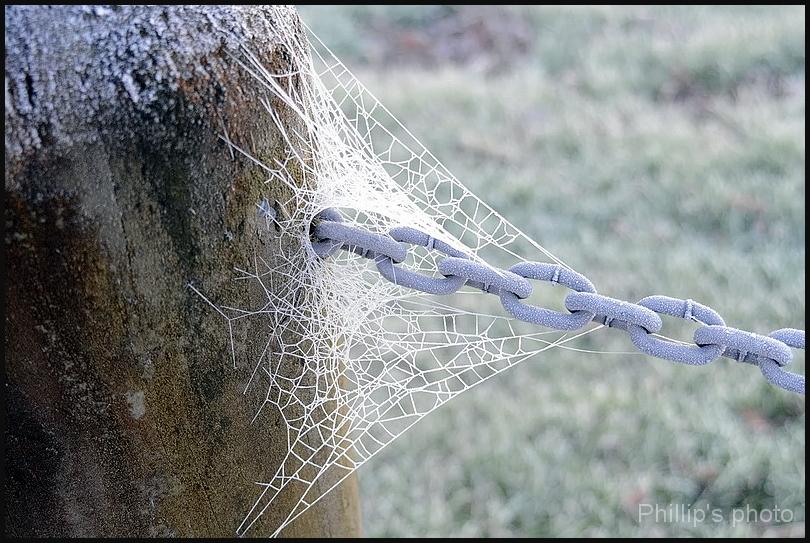 Cold Web