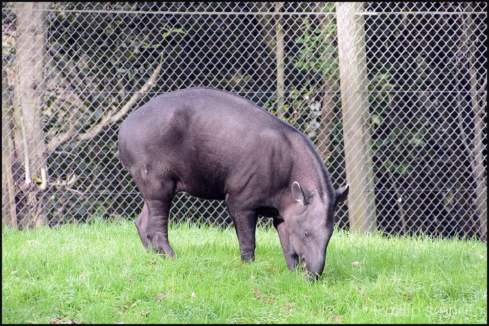 Hamilton Zoo #16