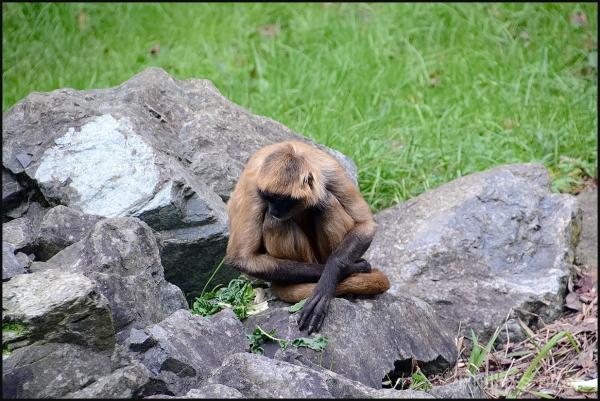 Hamilton Zoo #17