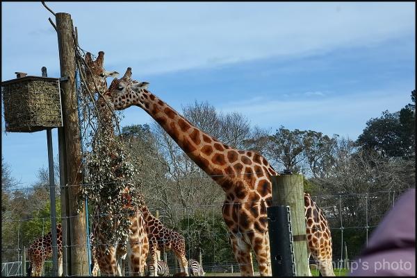 Hamilton Zoo #19