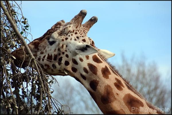 Hamilton Zoo #20
