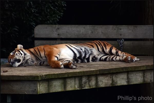 Hamilton Zoo #23