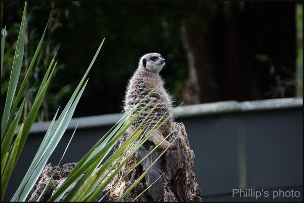 Hamilton Zoo #34