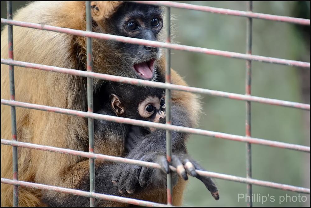 Hamilton Zoo #37.
