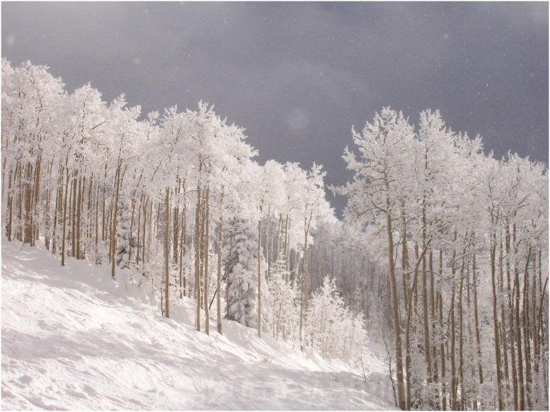 steamboat colorado skiing