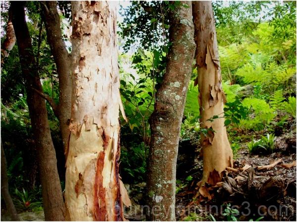lilli pilli bush trail