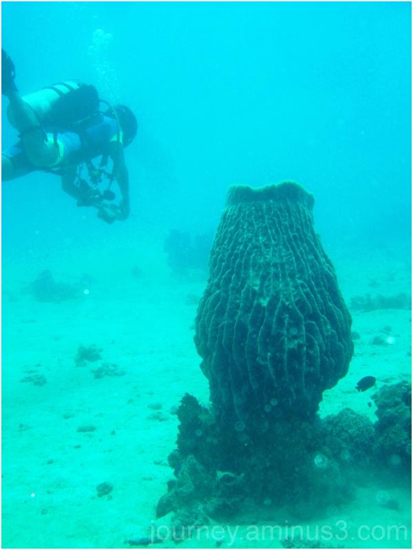 Scuba Dive Puerto Galera