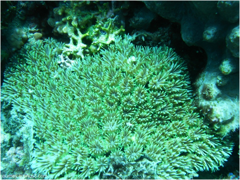 More bloody corals