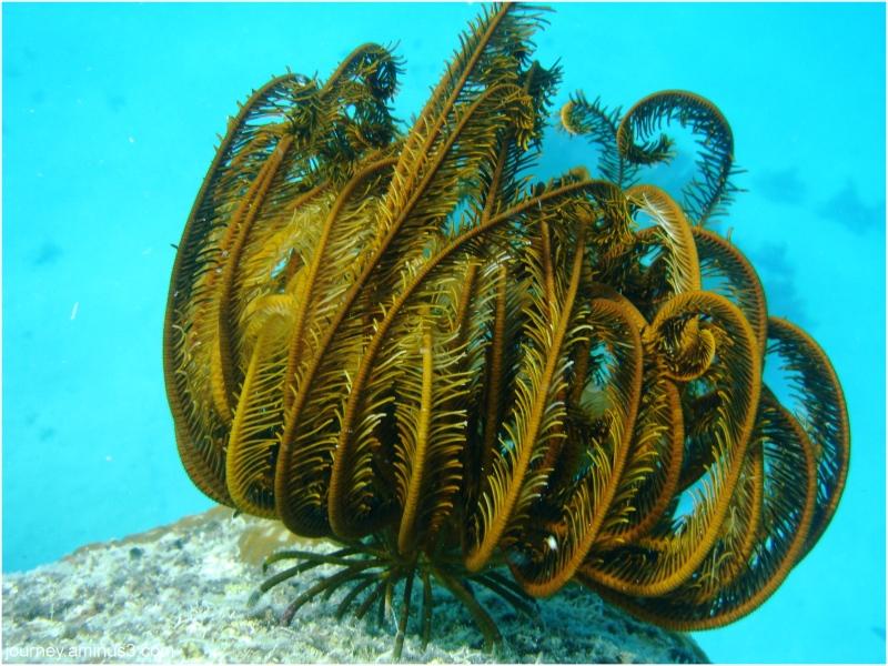 Soft Coral Fiji