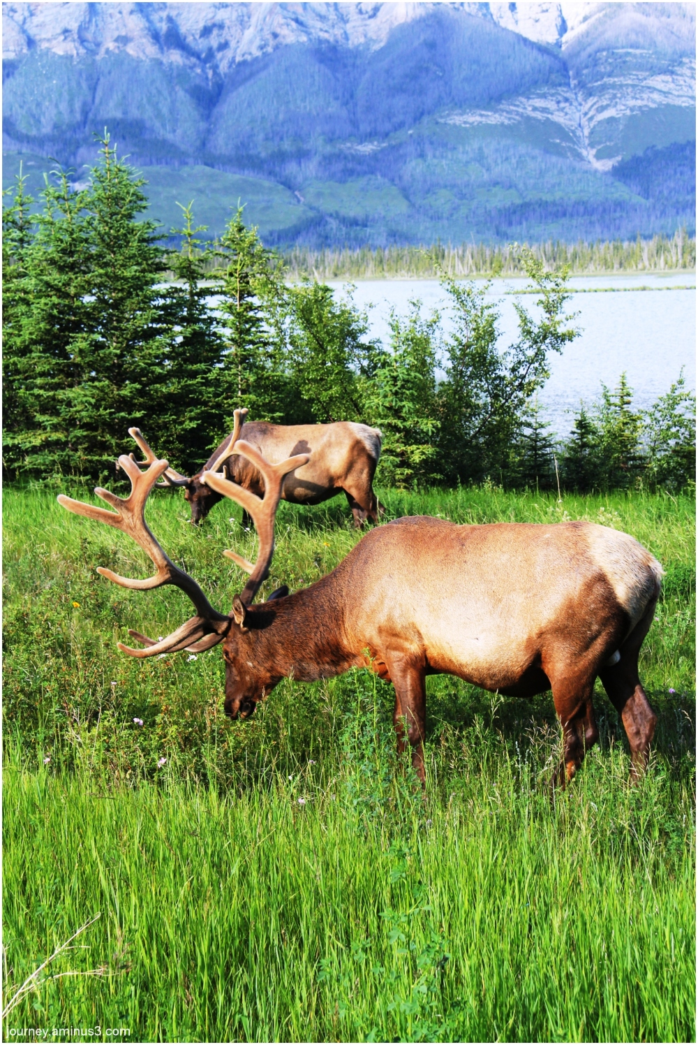 Elk Jasper
