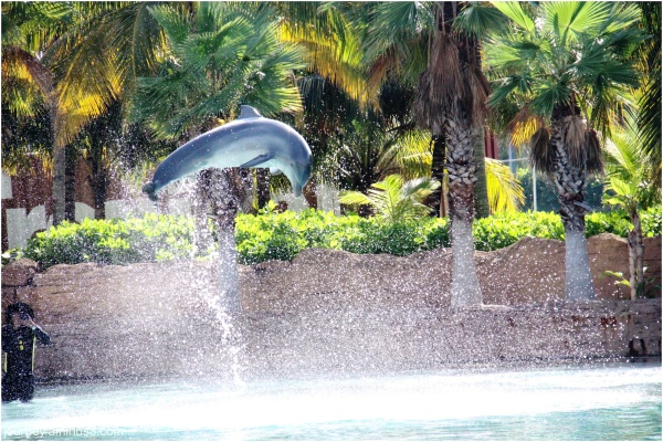 Atlantis Dolphin2