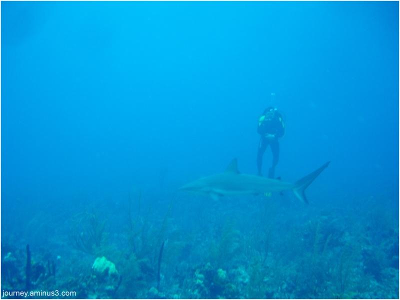 Atlantis Shark