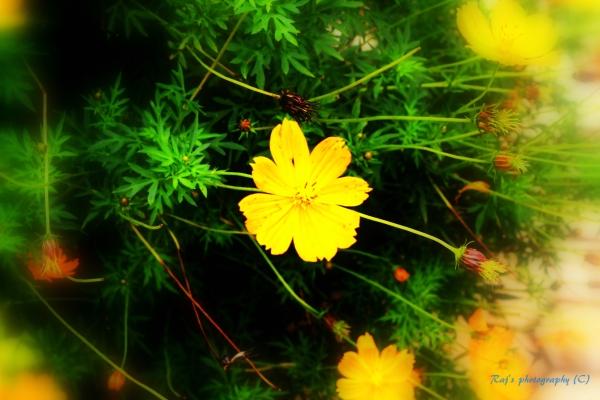 The yellow flowers bring sunshine