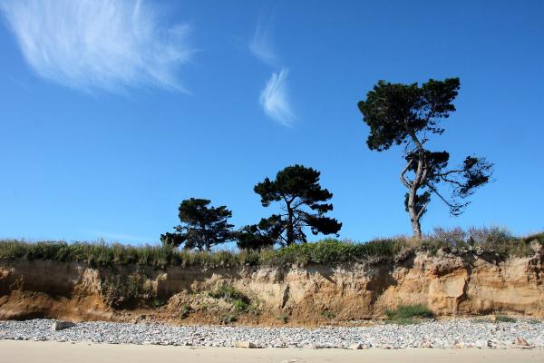 ailleurs mer plage nuage nature arbre