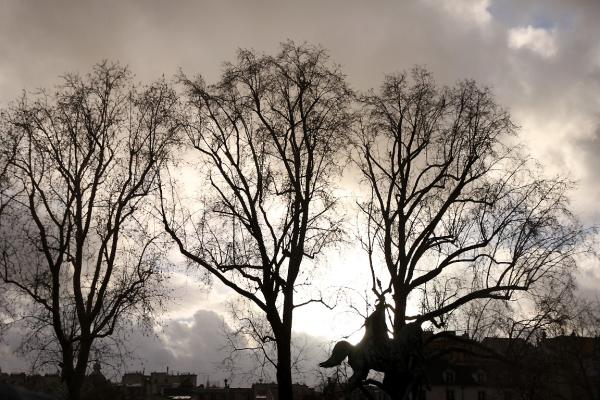 paris contre-jour arbre ciel